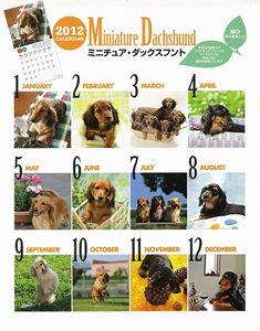 ダックスちゅらミニチュアダックス子犬モデル