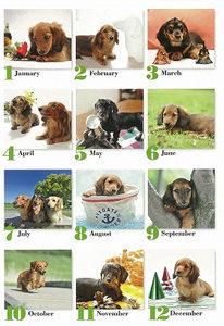 ダックスカレンダー2012ミニチュアダックス子犬モデル