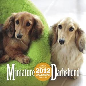 ダックス2012ミニチュアダックス子犬モデル