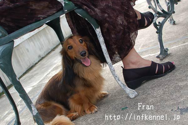 犬と一緒に三浦半島BBQ