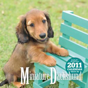 ミニチュアダックス子犬モデル